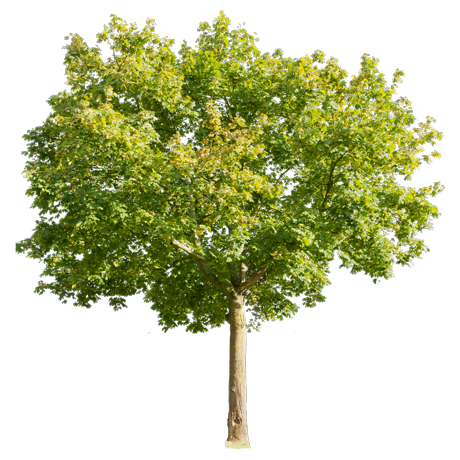 tree_acm0002_thumb.png