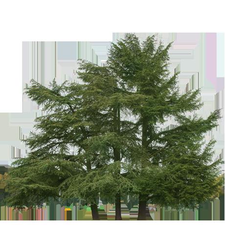 tree_acm0003_thumb.png